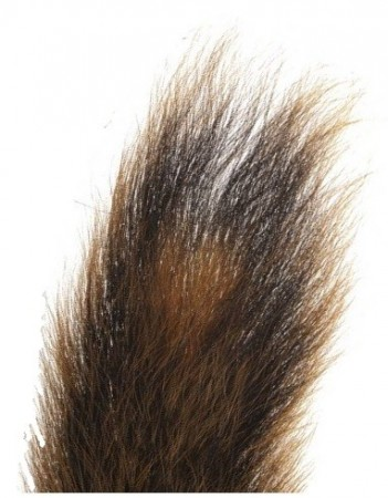Squirrel Tail, Natural Brown